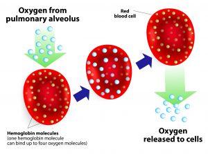 Zuurstof opname in Hemoglobine